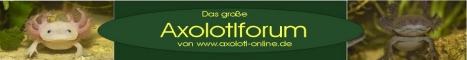 Axolotlonline_Logo_Forum_1_klein