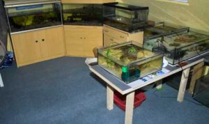 Axolotlzucht